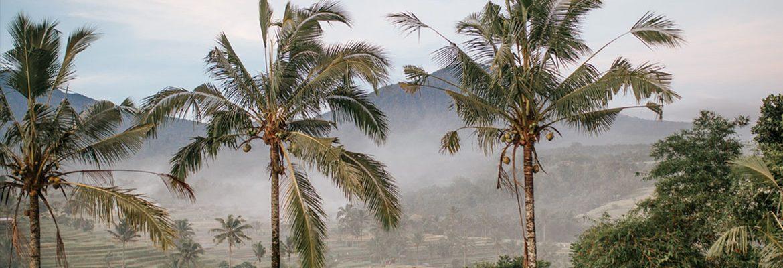 coconut sugar indo